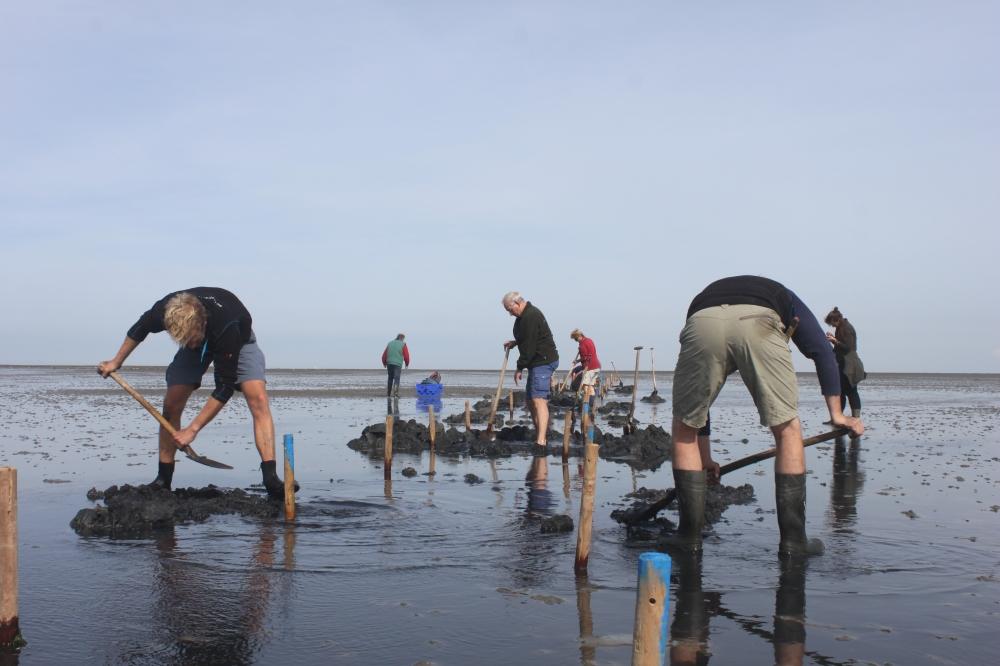 Aanleg van proefvlakken op Texel door the Fieldwork Company en vrijwilligers