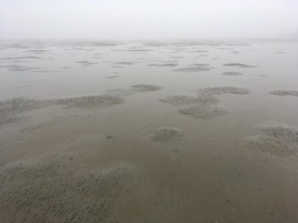 Kenmerkende zeegrasreliëf op winters wad bij De Noordkaap, Groningen