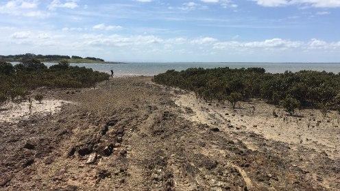 Mangroves met laag water